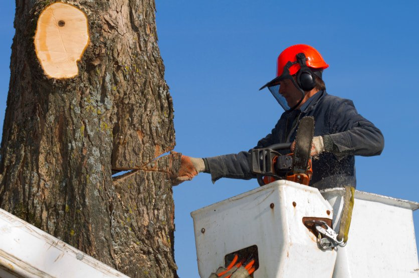 Tree Services of Macon - Tree Removal
