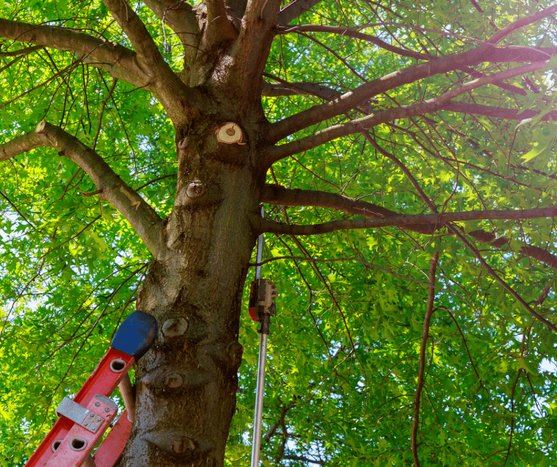 Tree Services Warner Robins