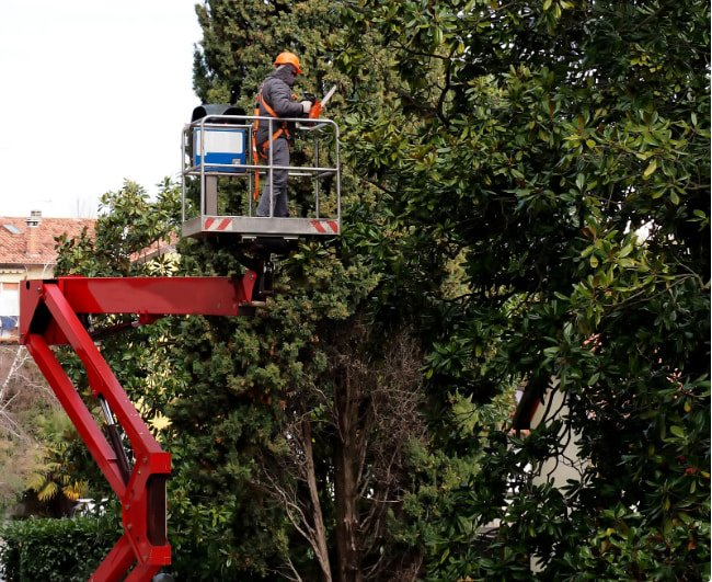 Tree Services of Macon - Tree Trimming Service