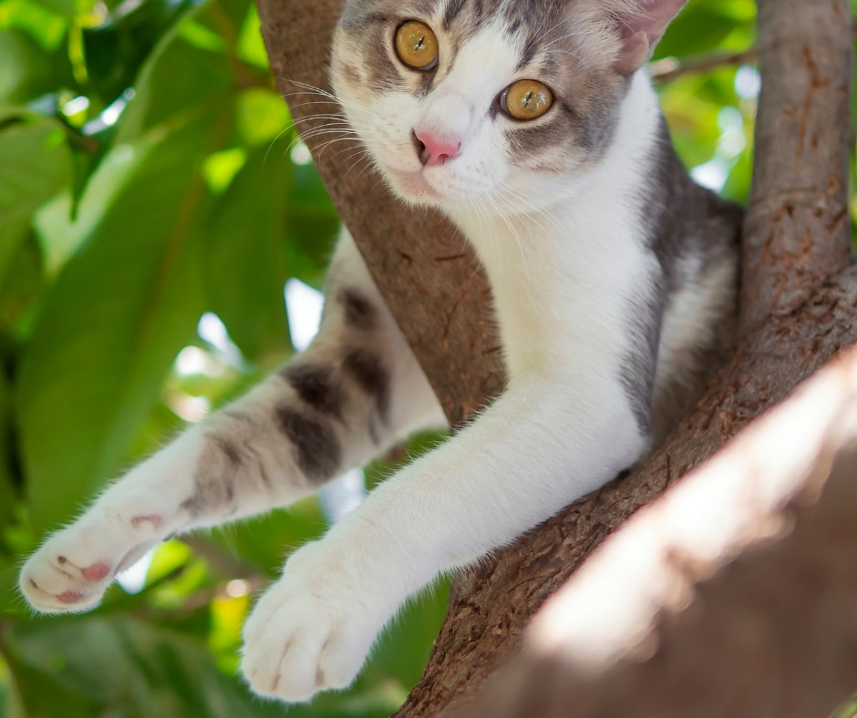 Cat in tree Rescue Service Page