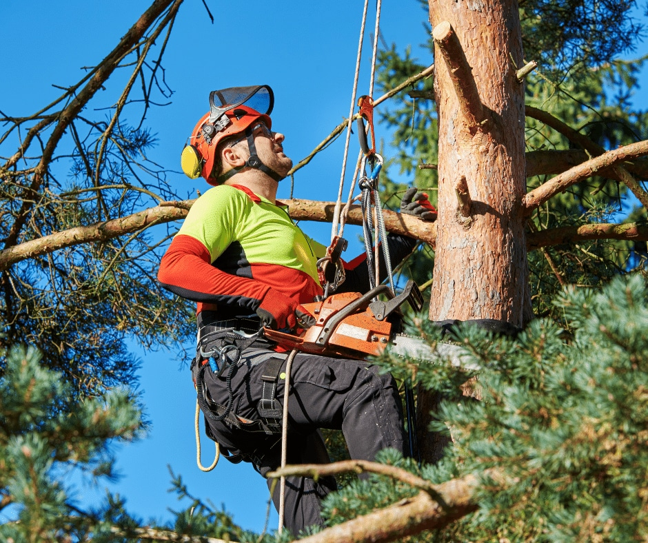 About Tree Services in Warner Robins